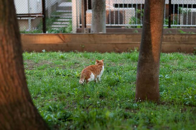 猫@世田谷公園
